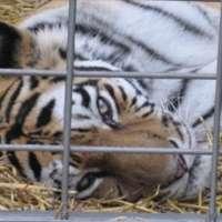 La tristezza sul volto. Chiudiamo gli zoo.