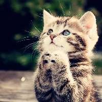 Giustizia per i 15 gatti fatti sbranare!
