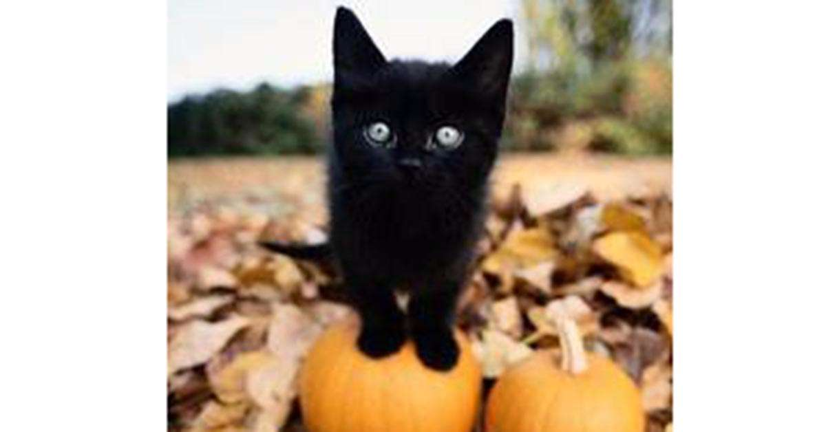 Basta con le stragi dei gatti neri ad Halloween