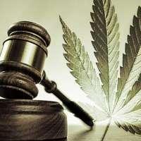 LEGALIZZAZIONE DELLA CANNABIS