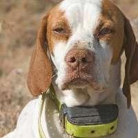 NO all'utilizzo del collare elettrico per i Cani