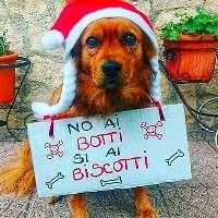 #NOAIBOTTI #SIAIBISCOTTI SAN PROSPERO s/S