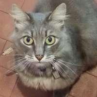Il gatto Sugar deve tornare al mercato di Sanremo!