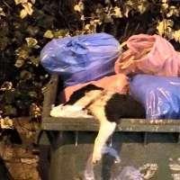 Firma per il cucciolo ucciso e gettato nell'immondizia!!