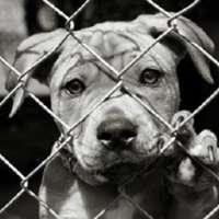STOP ALLA VENDITA DI ANIMALI