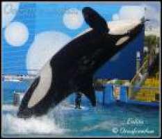 LIBERIAMO  L' ORCA LOLITA!!!!