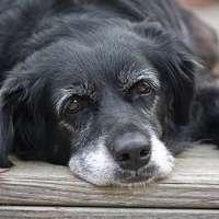 contributo per chi adotta e possiede animali domestici