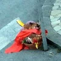 Due galline uccise per scommessa! Giustizia!