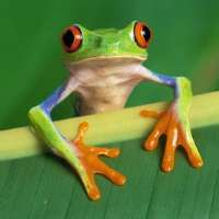 Contro la pratica orientale di mangiare rane vive!