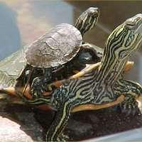 Tartamondo ha bisogno di aiuto! Salviamo le tartarughe!