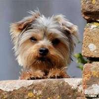Prigione a vita a chi ha dato fuoco al cagnolino a Olbia!