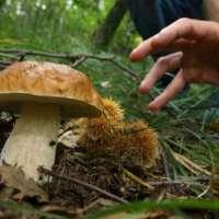 diritto di andare a funghi in abruzzo