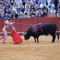 Sostenete il divieto della corrida nelle Baleari!