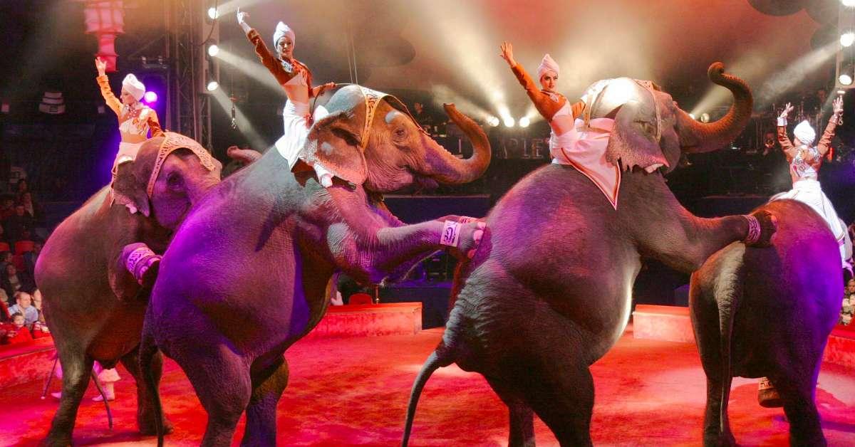 Stop al circo!