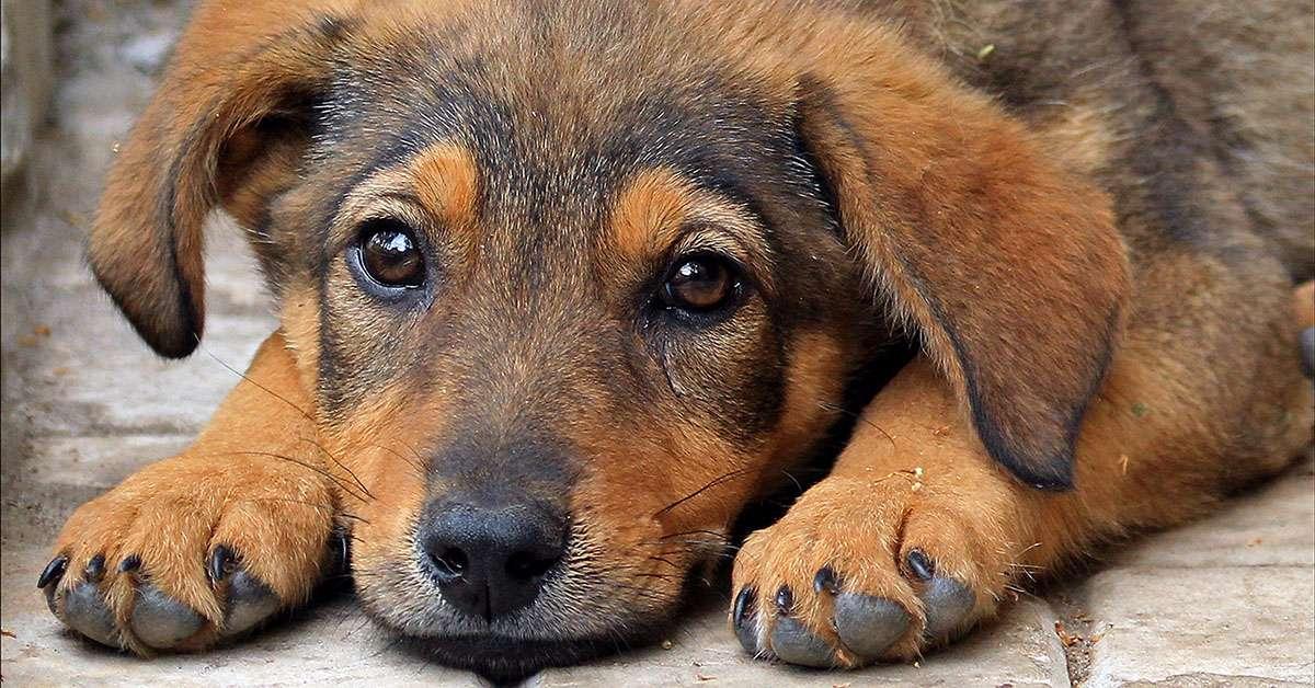 Cuccioli uccisi per allenar cani da combattimento: basta!