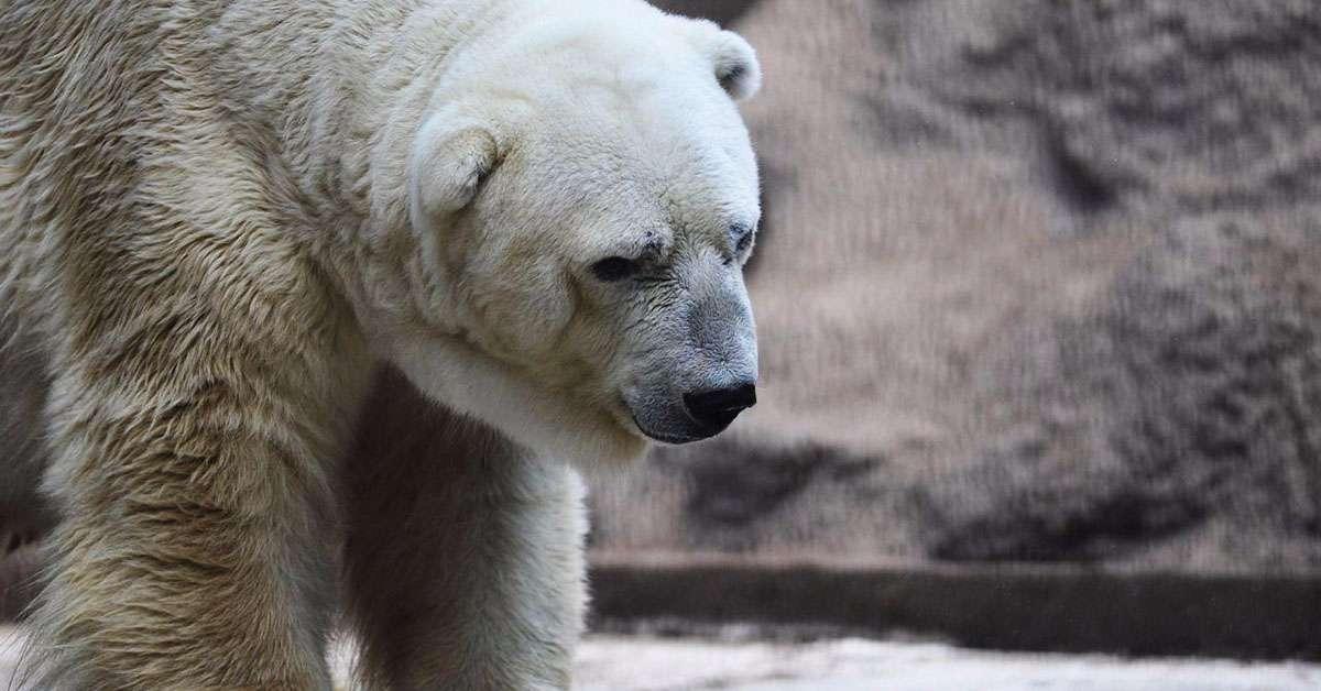 Basta morti inutili come quella dell'orso Arturo!!