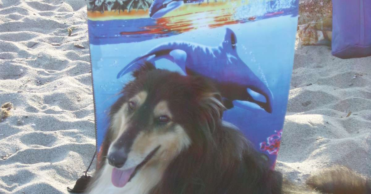 Spiaggia per cani Lidi di Comacchio