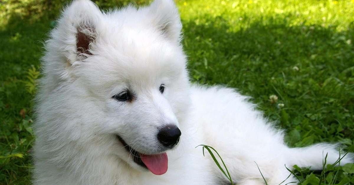 Giustizia per angelo  cane torturato  e ucciso  a cosenza