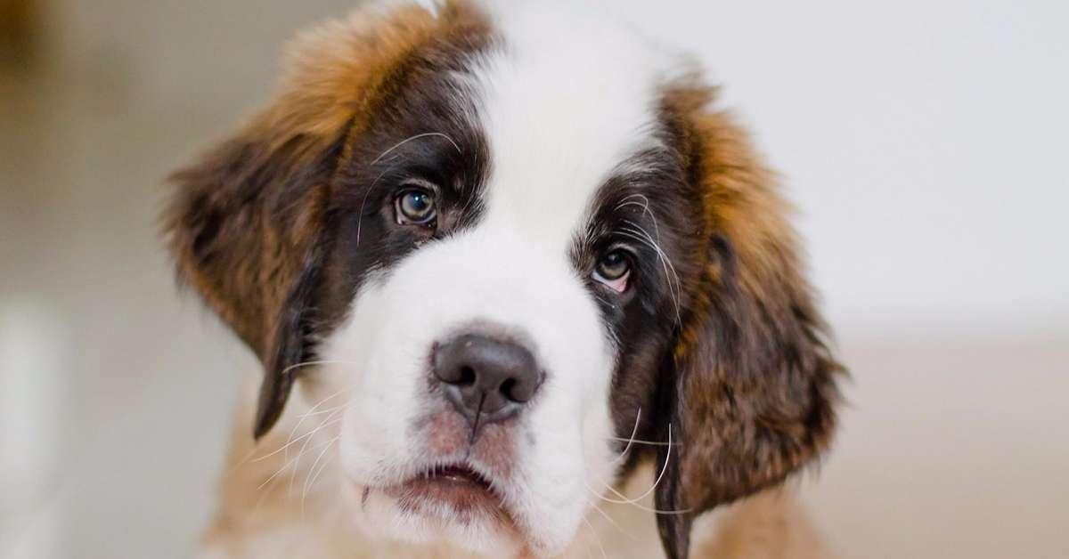 Giustizia per il cane abbandonato e investito!