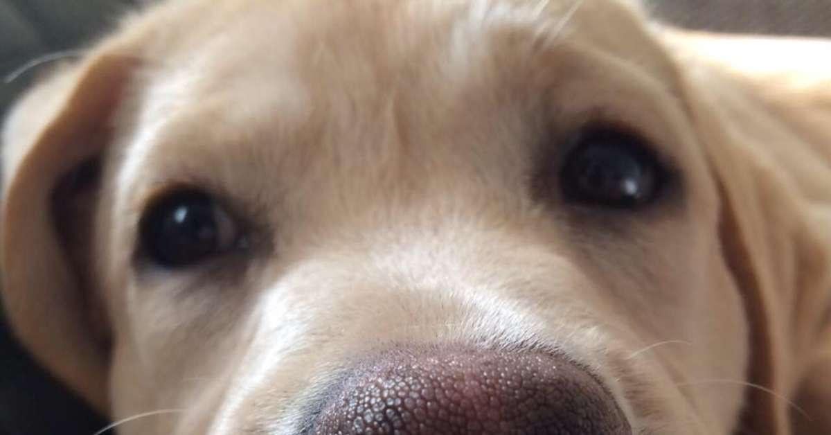 Area Libera per Cani nel Comune di Cossato