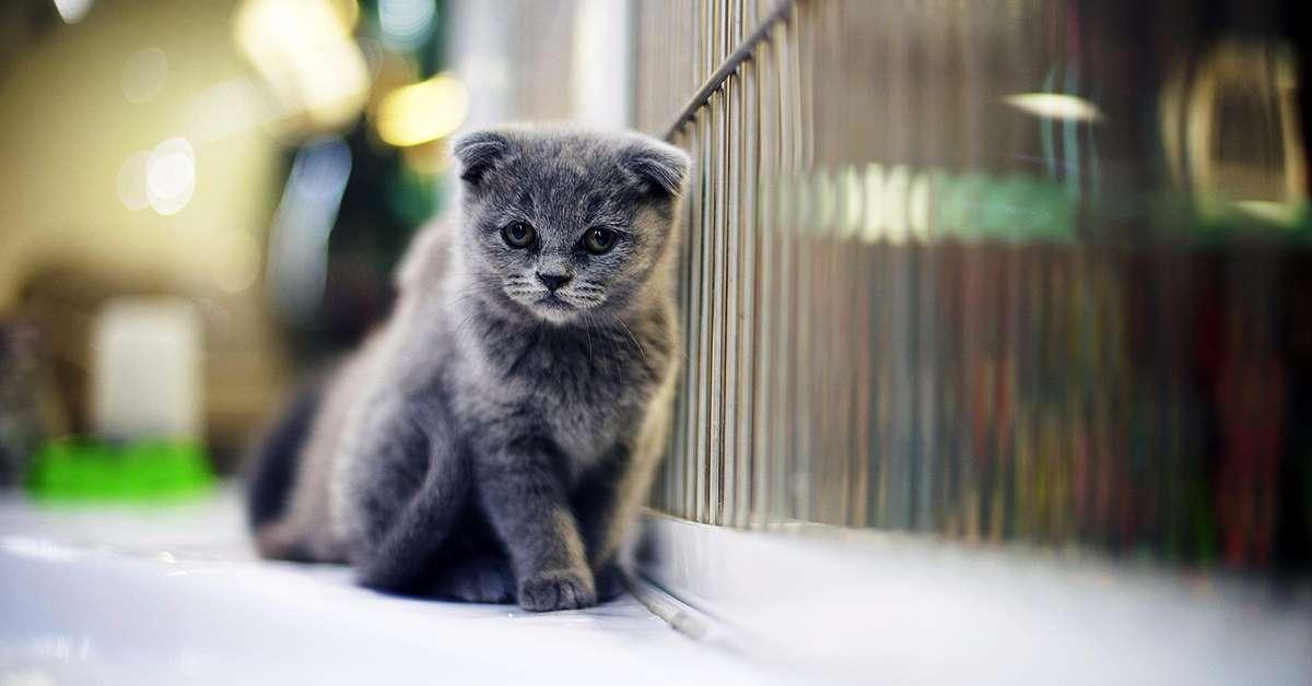Giustizia per il massacro del gattile di Follonica!