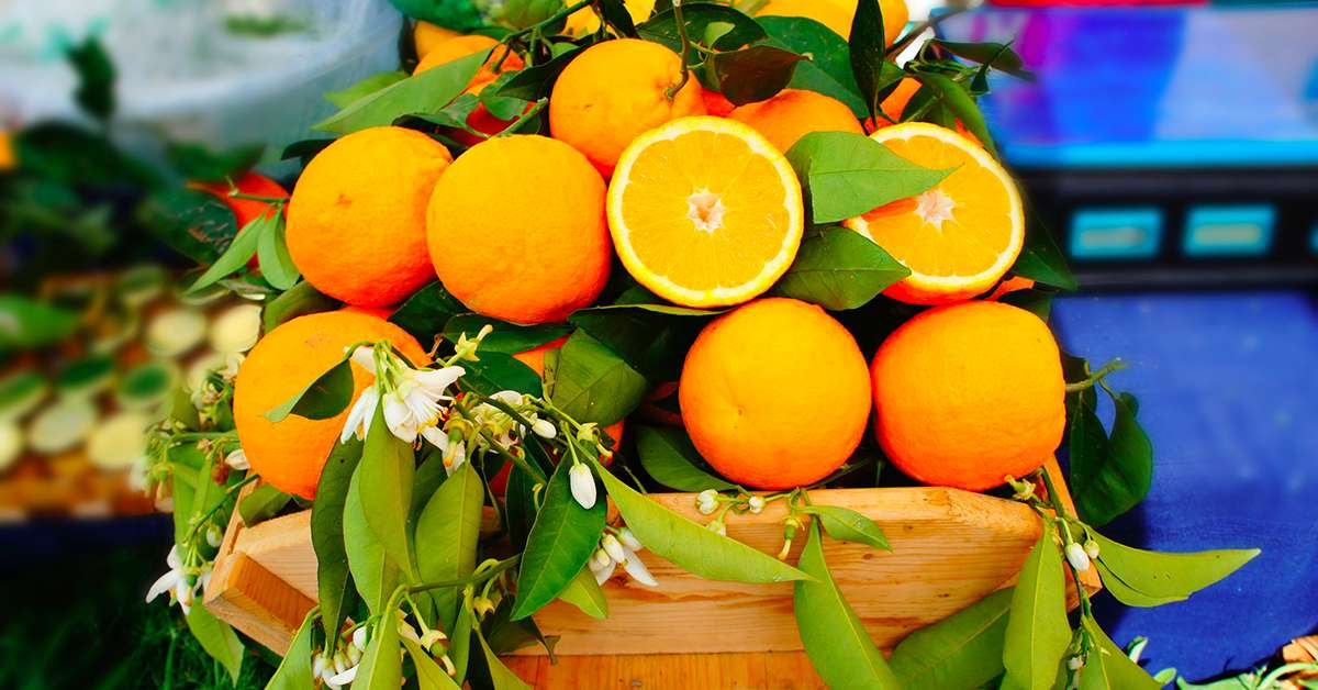 Le arance di Sicilia devono essere vendute sul mercato IT