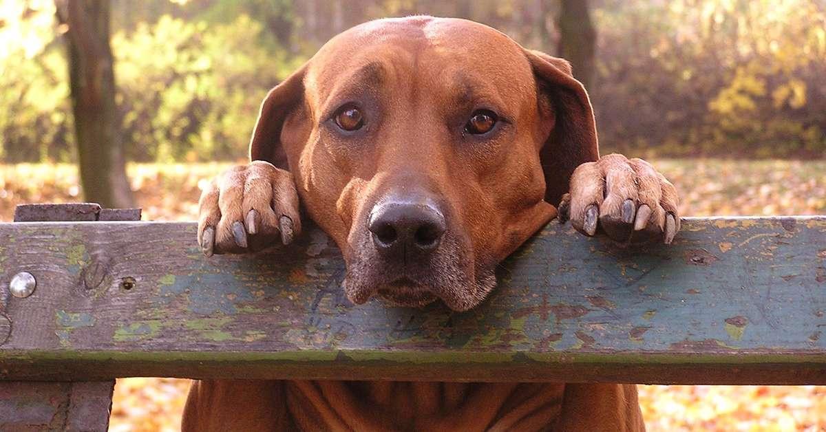 Stop all'abbandono di cani