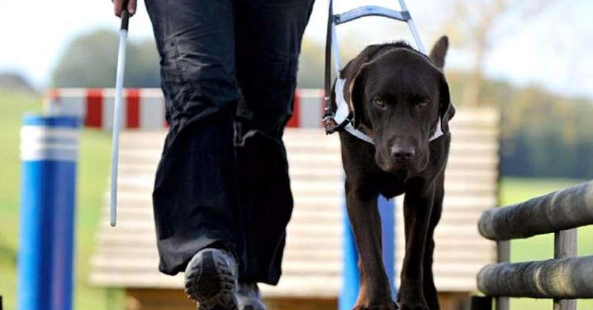 Salvaguardiamo la legge per i cani guida!