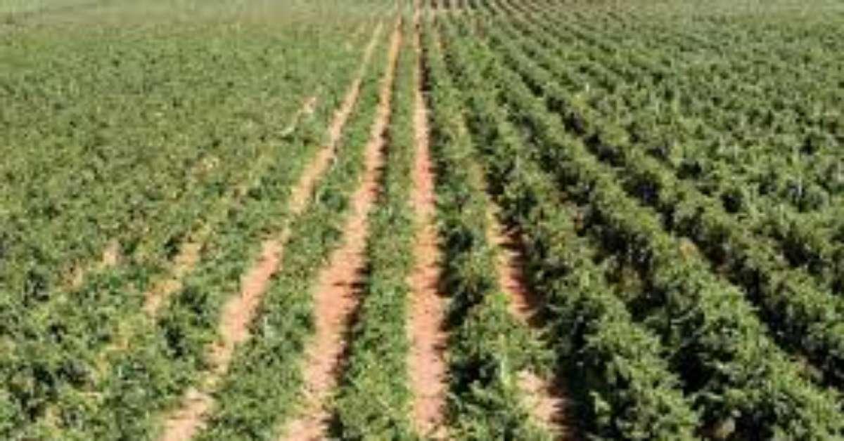 Terreni da coltivare per tutti