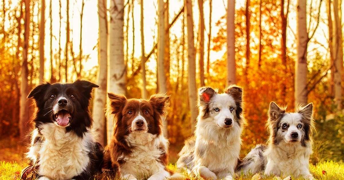Quattro cani uccisi a sangue freddo! Giustizia!