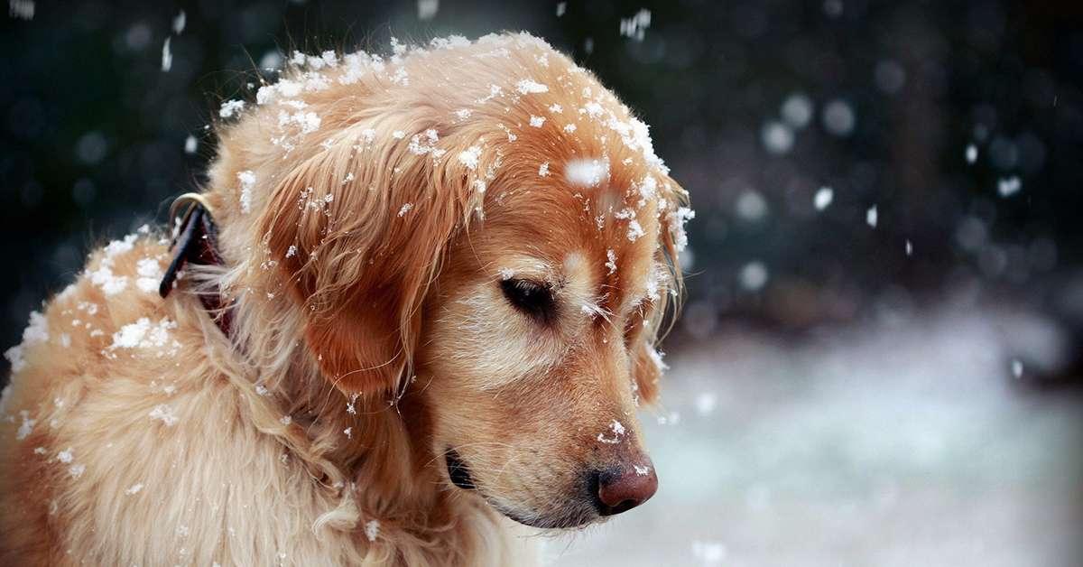 Anche gli animali muoiono di freddo!