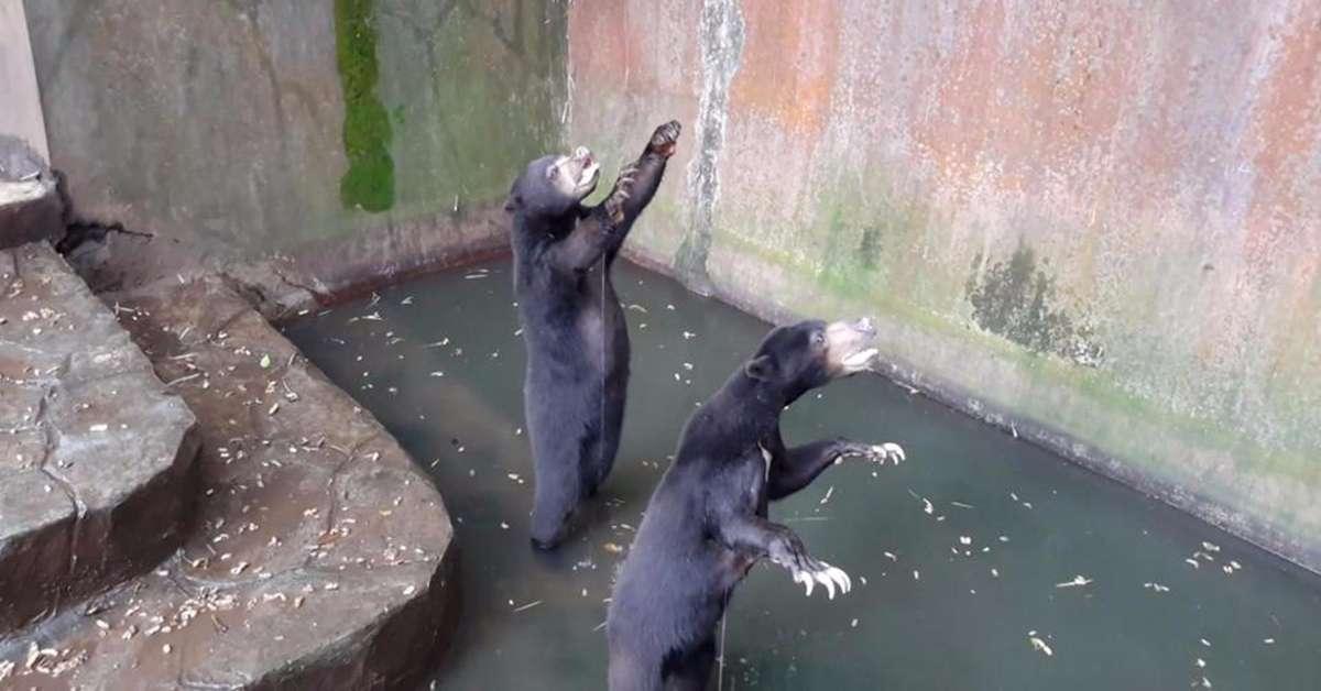 Chiusura dello zoo della morte indonesiano!!