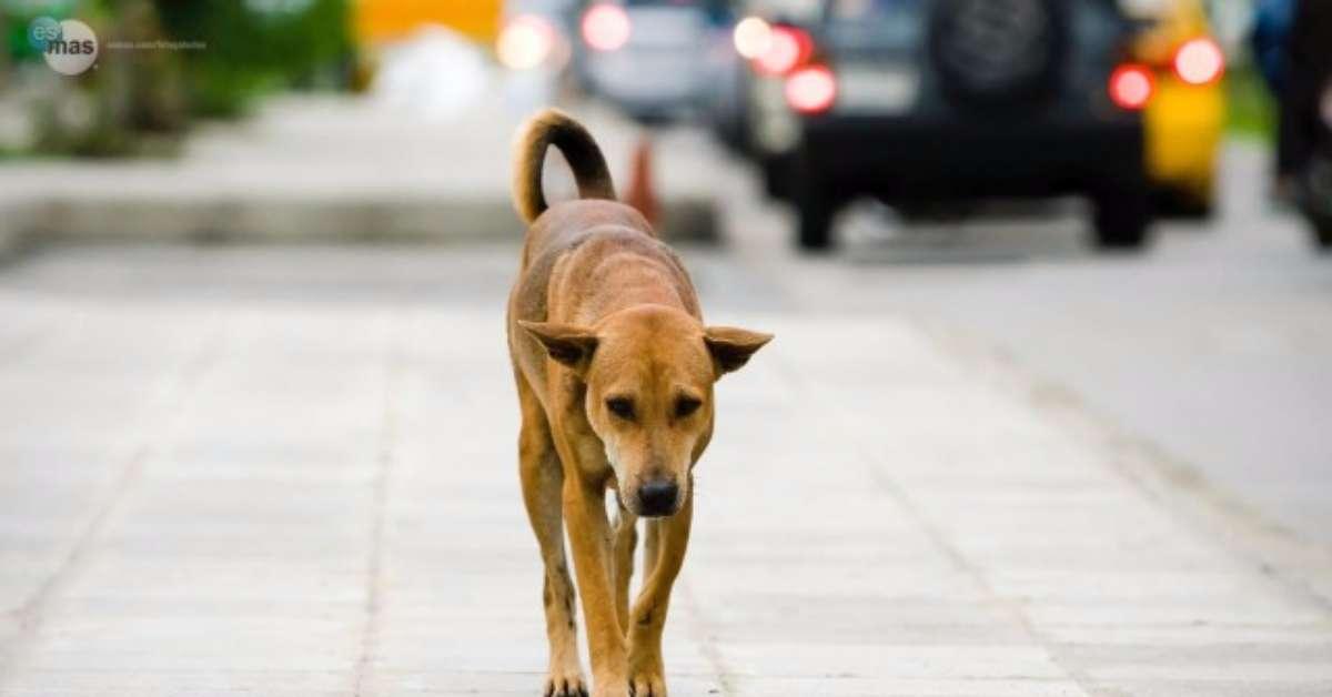 No al contributo di 260 euro a chi adotta un cane