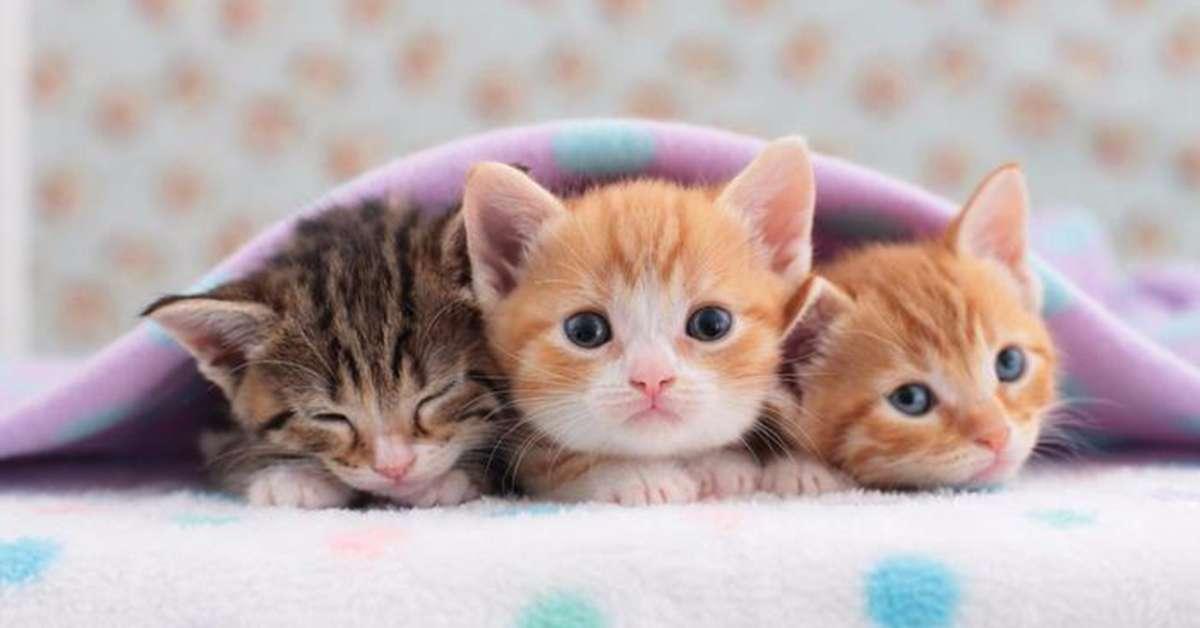 Gatti seviziati e mangiati: condanniamo questo orrore!