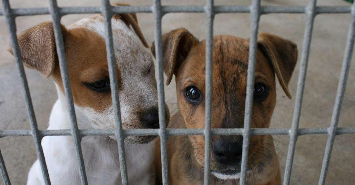 Vogliamo cani a gatti trovatelli nei negozi di animali!