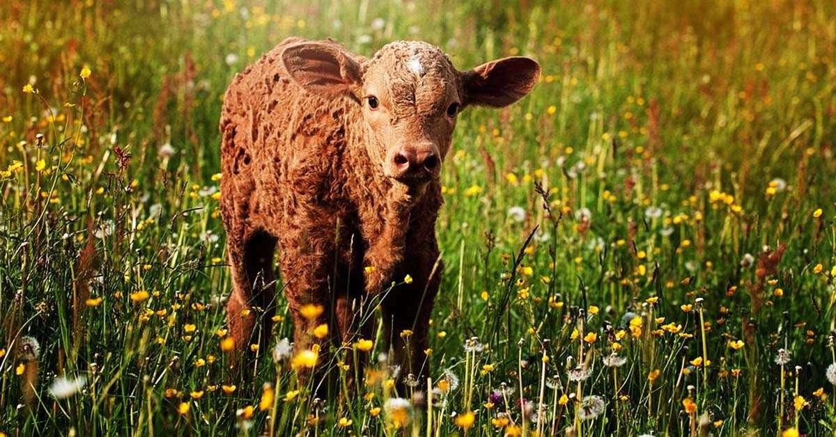 Strage di vitellini, conigli e caprette! Adesso basta!!