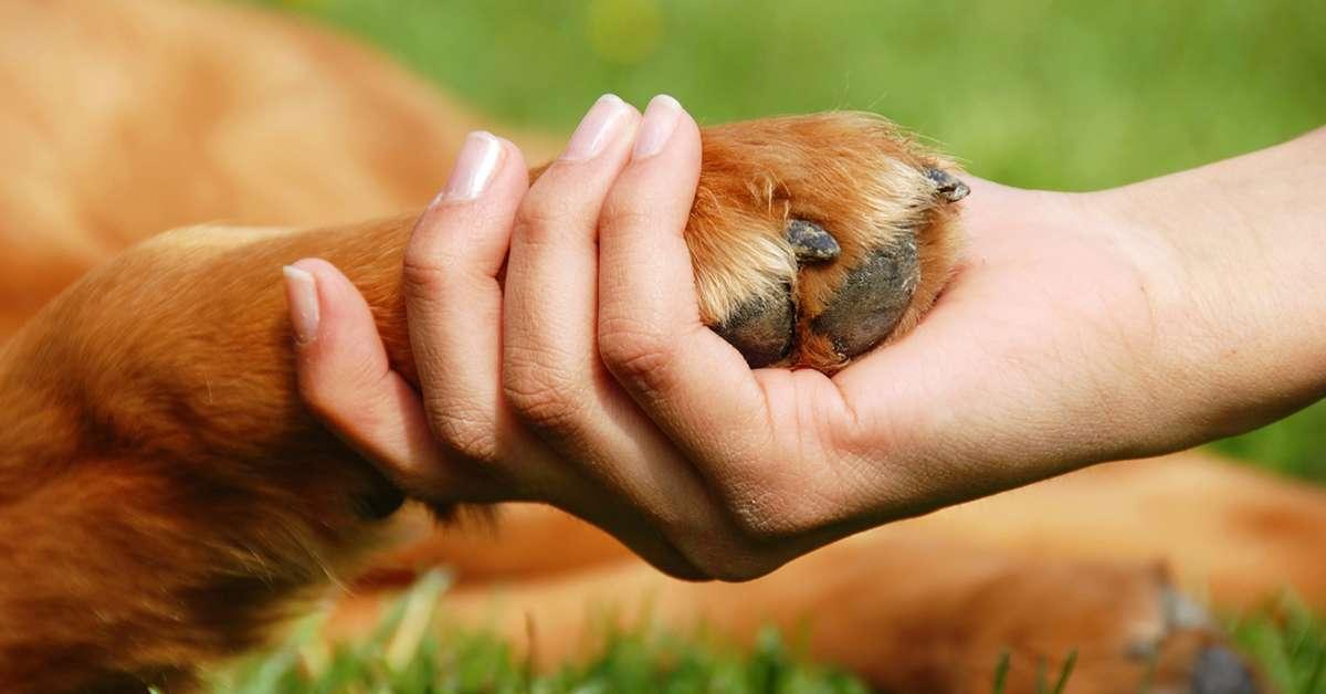 Veterinari mutuabili per chi adotta un cane