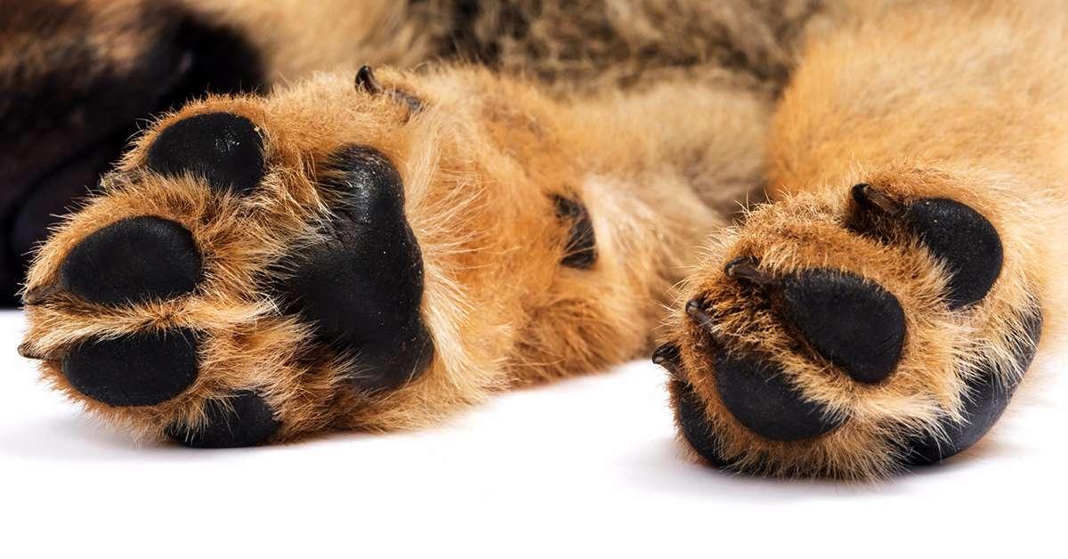 Cani lanciati dal balcone: basta violenza contro i deboli