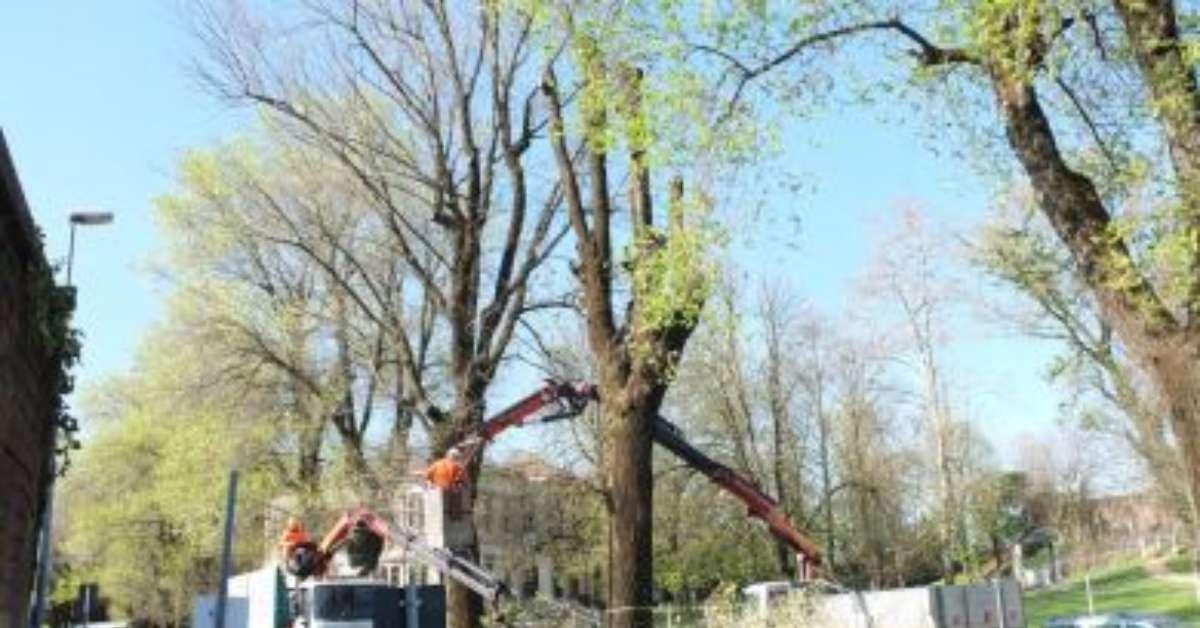 Basta abbattere alberi sani