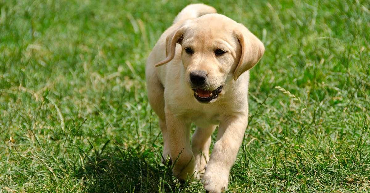 Fermiamo il killer dei cani!