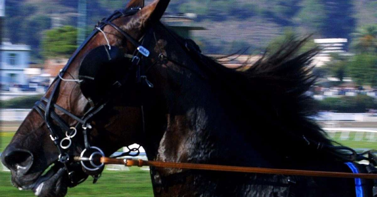 Cavalli e corse clandestine! Basta!