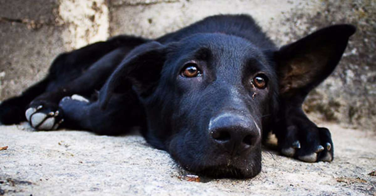 Giustizia per il cane di Andria investito!