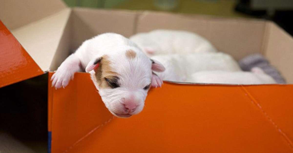Dimissioni dell'assessore che ha abbandonato 4 cuccioli!