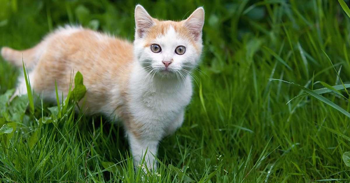 Licenziata per aver aiutato un gattino! È un'ingiustizia!