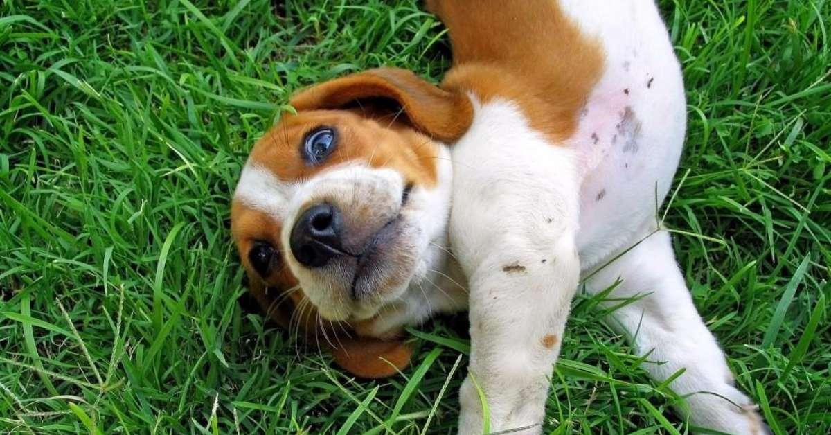 Cucciolo di 3 mesi gettato dal balcone: basta crudeltà!