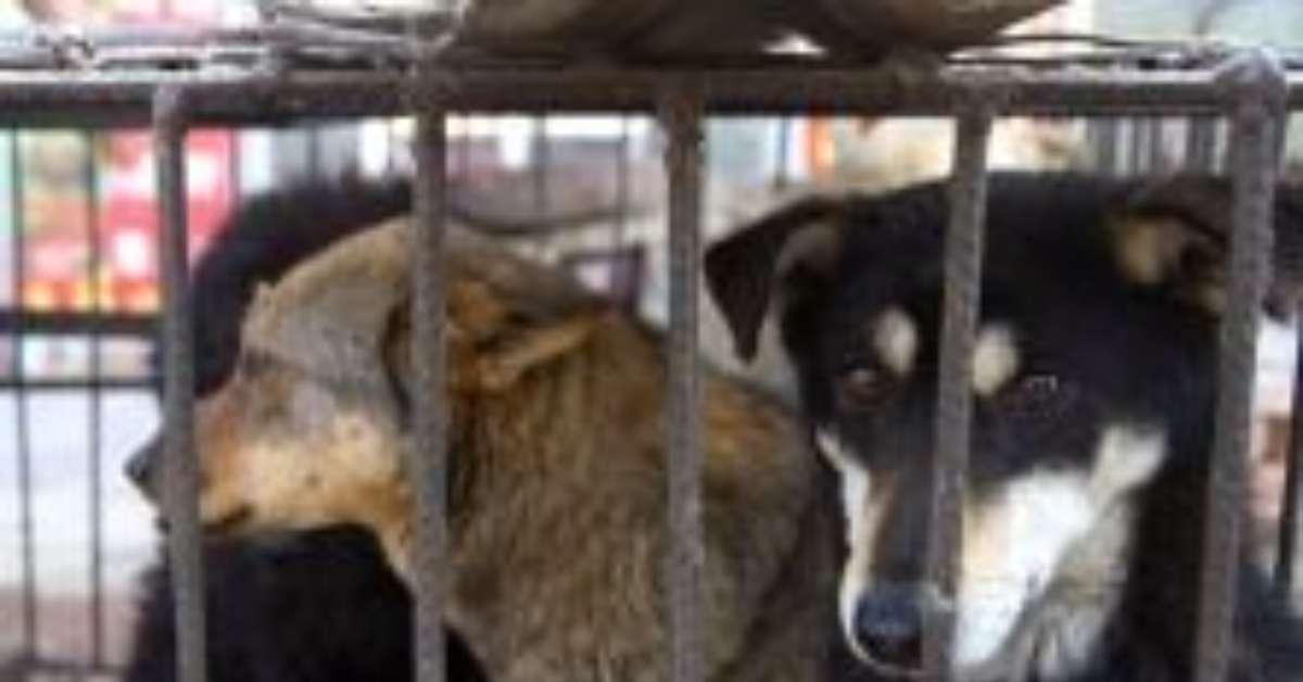 Stop vendita e uccisione cuccioli invenduti in Giappone