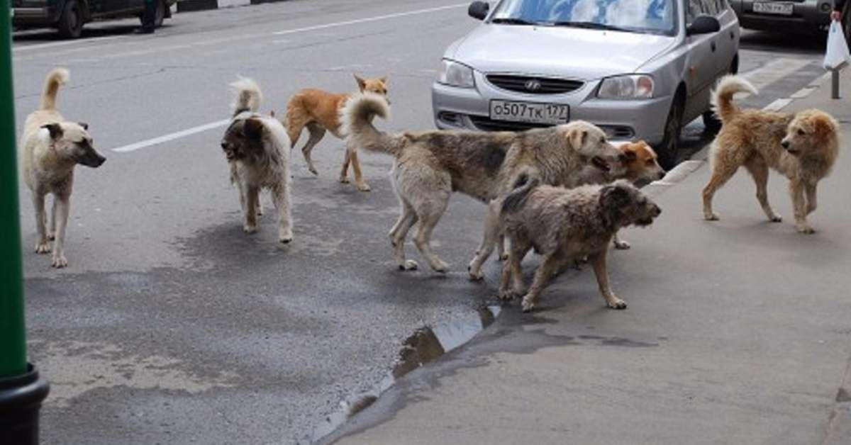 Giustizia per il bambino sbranato dai cani randagi!