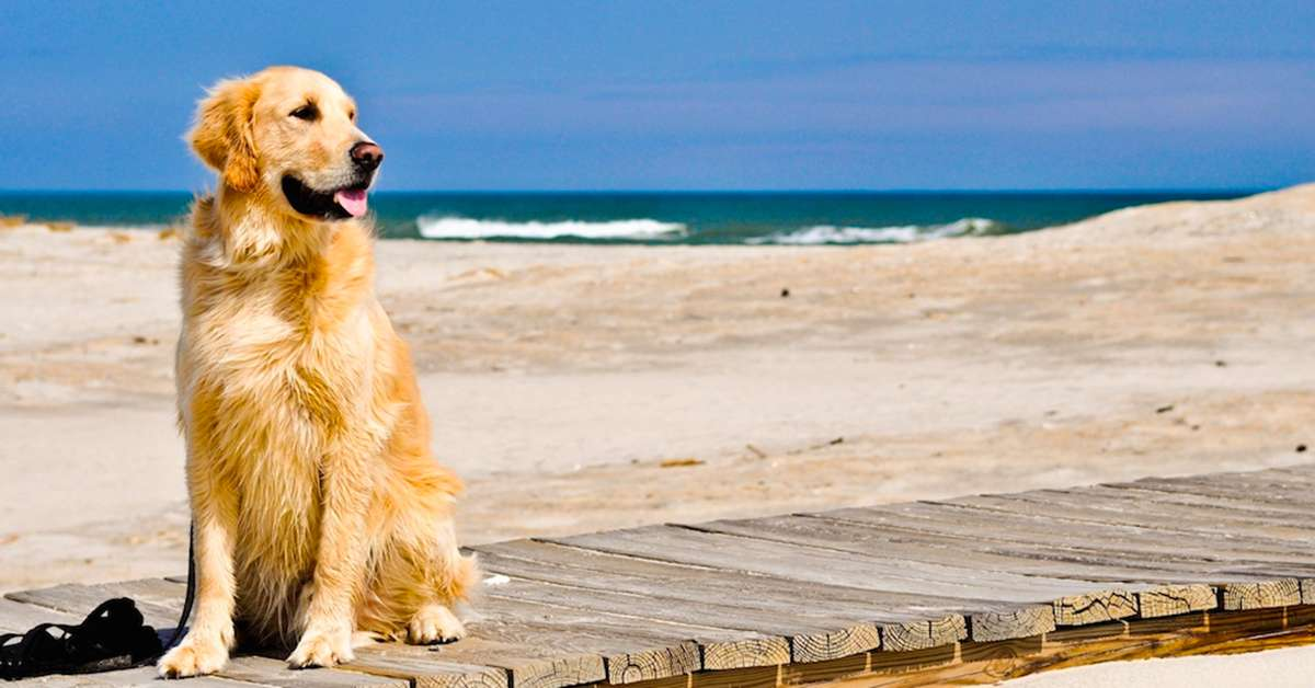 Spiaggia libera aperta ai cani in provincia di Ferrara!