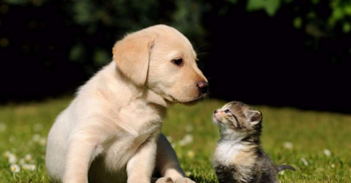 limitiamo allevamento cani e gatti