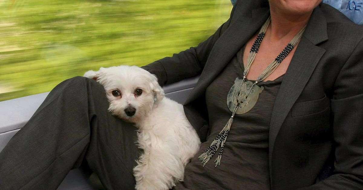 in treno con due cani